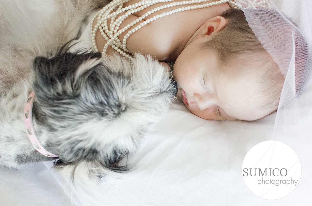 Newborn and dog portrait gold coast