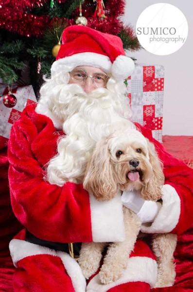 Santa Paws, Pet Portrait by Sumico Photography