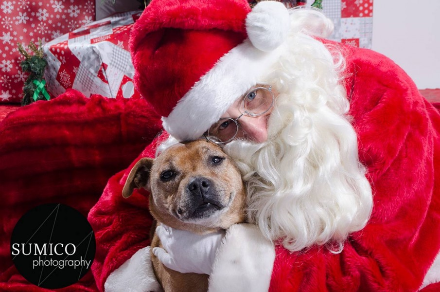Santa Paws at FurryKids@Play , Photo by Sumico Photography