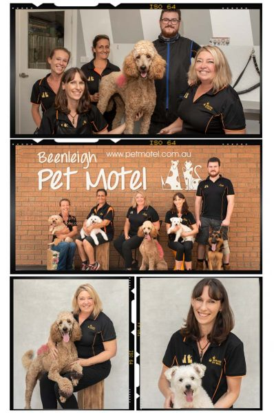 Team Photos with Dogs | Beenleigh Pet Motel by Sumico Photography